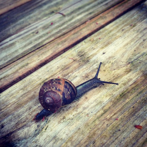 Spring running snails